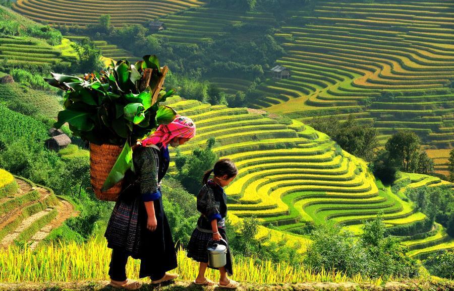 <p>Terraced rice field in Sapa</p>