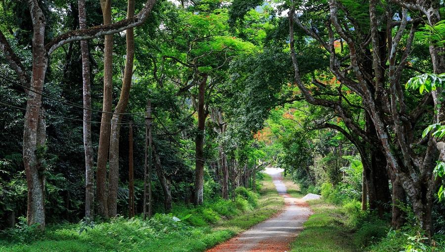 cho thuê xe đi vườn quốc gia Cúc Phương